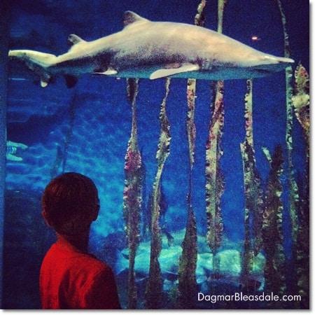 Norwalk Aquarium, Connecticut