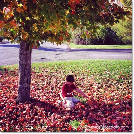 boy playing in fall foliage, autumn leaves