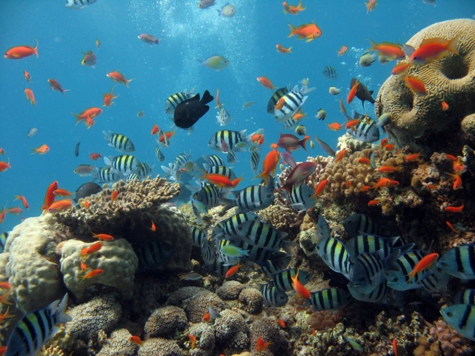 Red-Sea-Diving-Underwater Sunshine holidays & more in the South Mediterranean