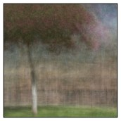 A tree photographed in the round just outside the municipal building in Scottsdale Az. © Stephen D'Agostino. An example of photo impressionism.