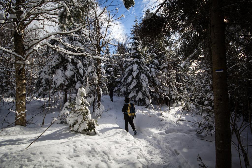 Promeneur dans la forêt enneigée.