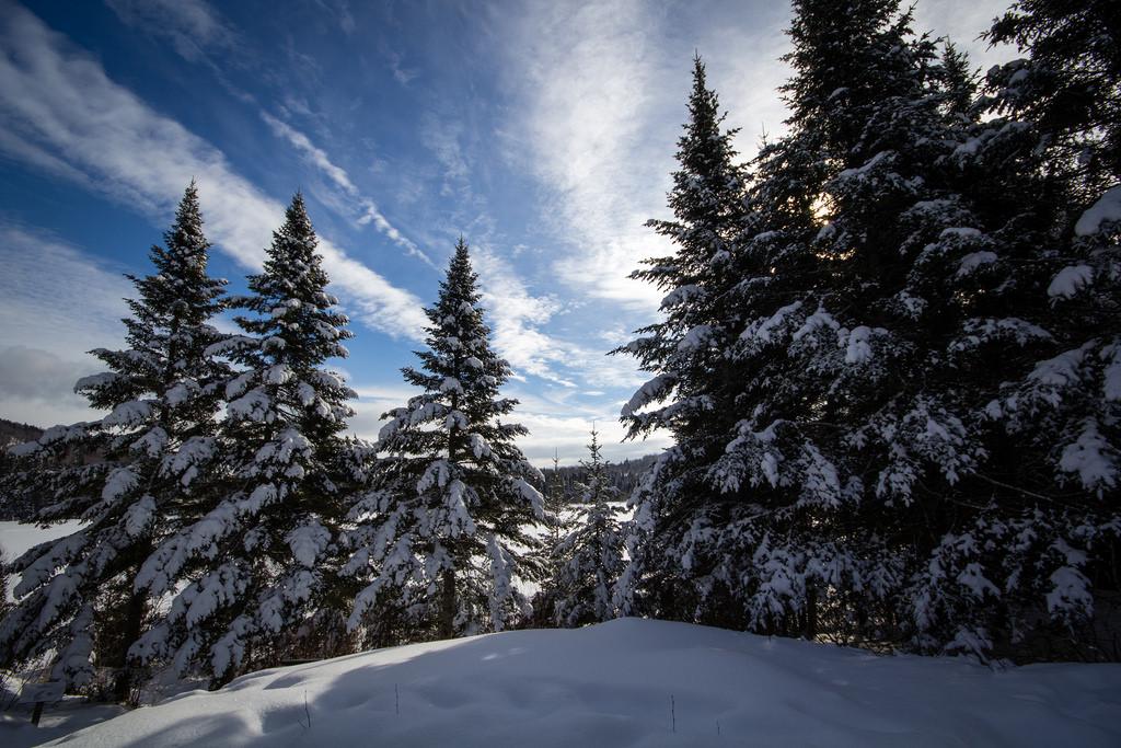 Arbres enneigés sur le Sentier des Caps.