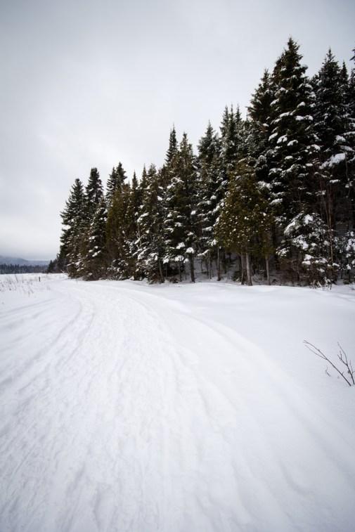 Un chemin menant vers la forêt enneigée.