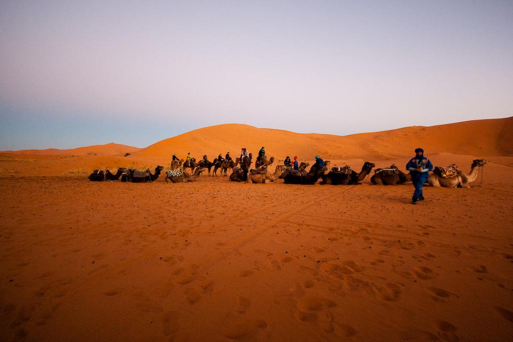 Préts au départ matinal, dans les dunes de Merzouga.