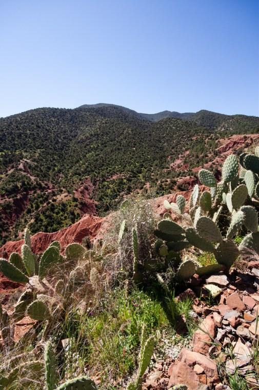 Cactus, terre rouge et arbres verts profonds.