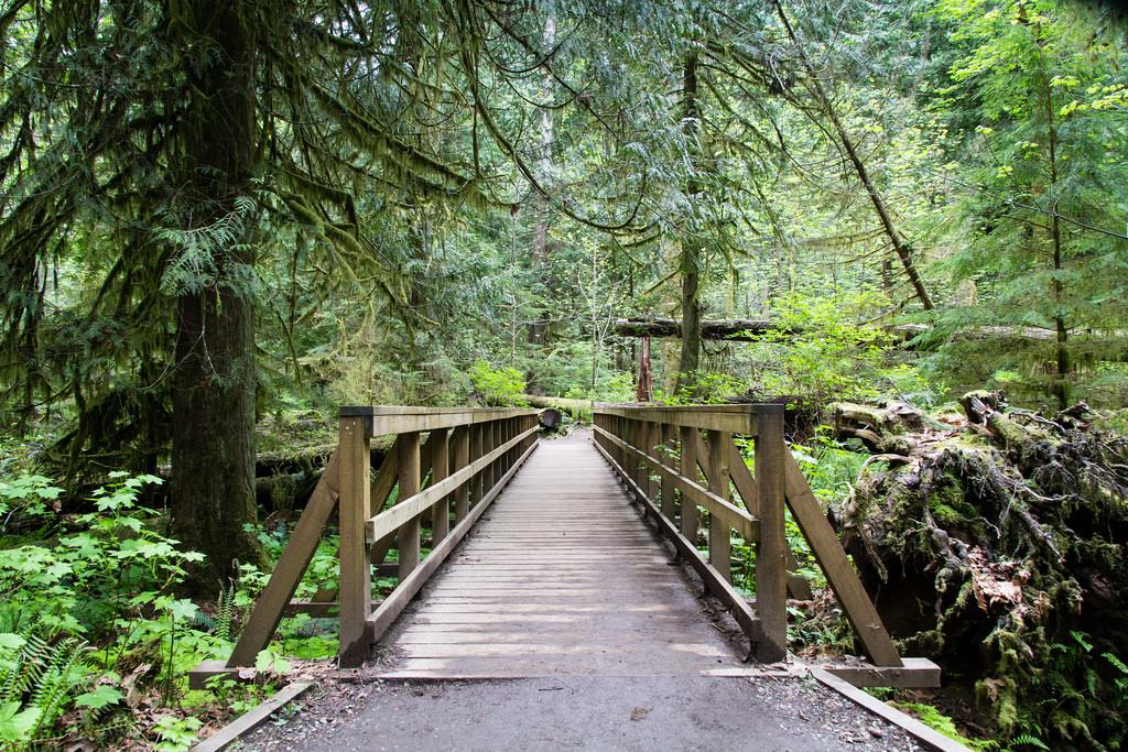 Au coeur de l'ile de Vancouver, en pleine foret.