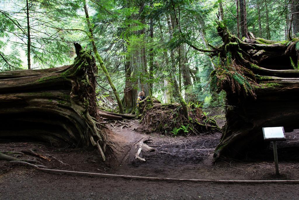 Passage entre les racines.