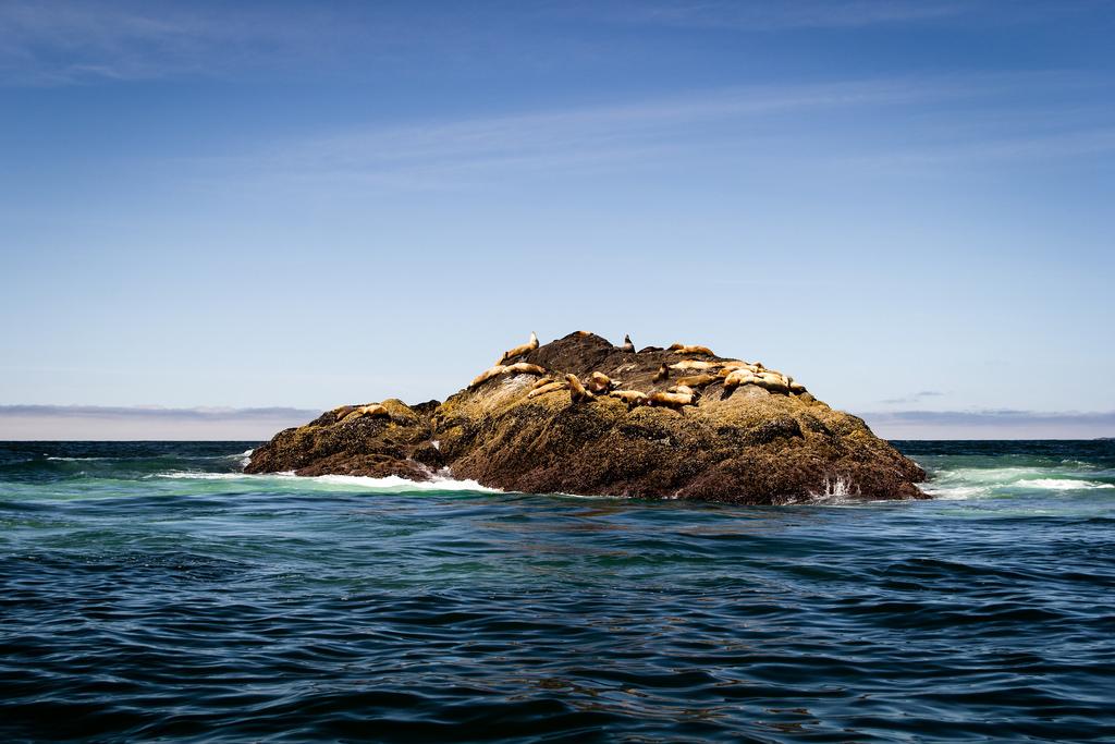 Phoques et lions de mer sur un rocher.