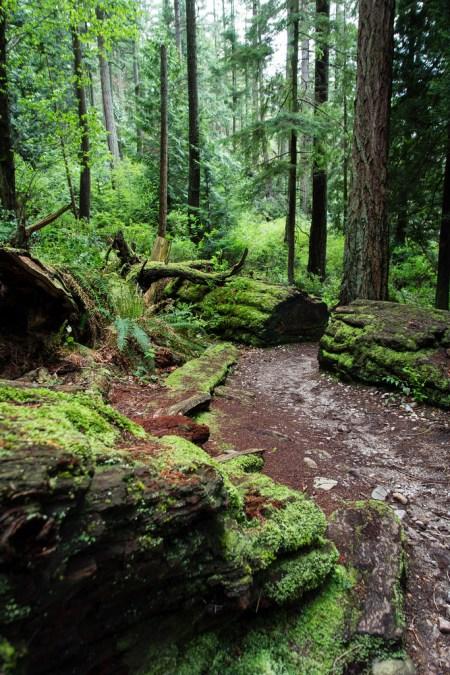La banlieue verdoyante de Vancouver City.