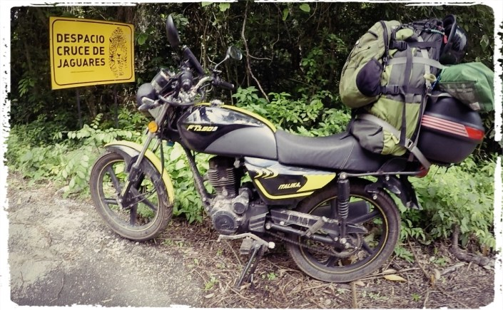 "'Caution-Jaguars Crossing"""