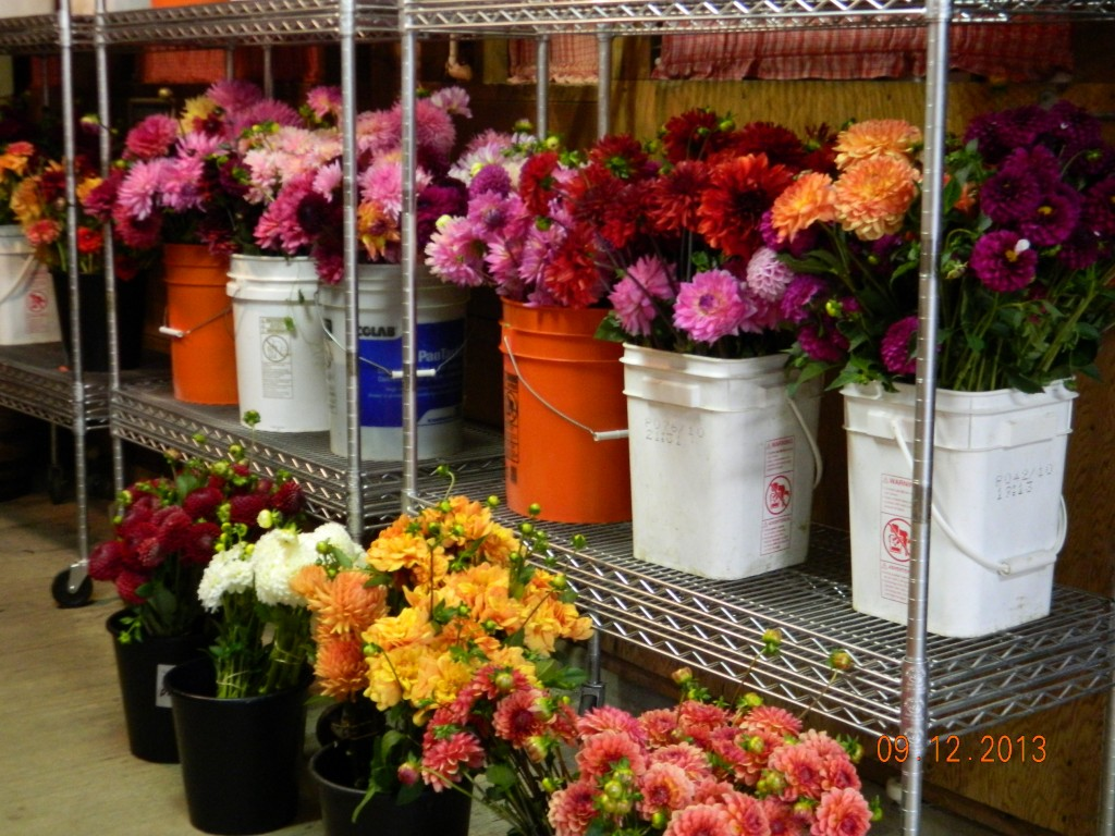 Bulk Cut Flower Orders For Local Weddings