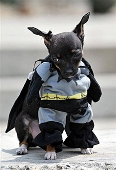 A dog dressed as Batman participates in the Family Pet festival in Cali, department of Valle del Cauca, Colombia. (AFP/Luis Robayo)