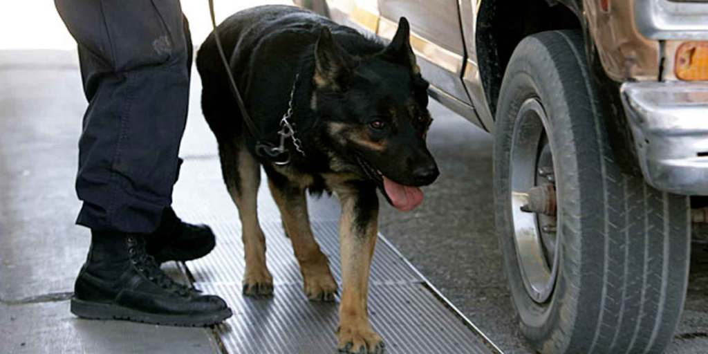 Dog Sniff Didn't Unlawfully Prolong Traffic Stop