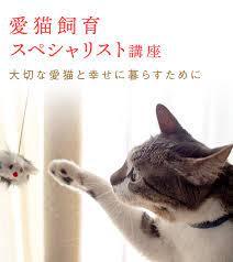 オンライン通信講座ユーキャンで「愛猫飼育スペシャリスト」資格を取得する