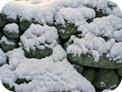 本格的な冬が来た