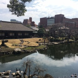 [庭園はいいぞ] 2ヶ月ちょっとしか見られないレア庭園。浅草寺伝法院庭園で春を感じてみた