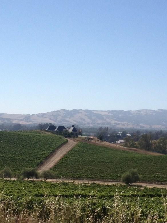 Vineyards in Napa, CA