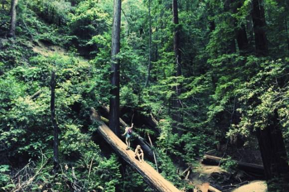dl_forest_juliaceaser