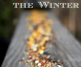 Attracting Birds in the Winter 12