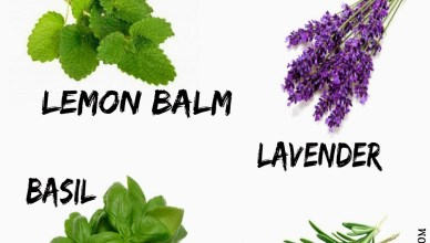 Herbs that keep Mosquitoes Away 31