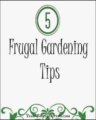 5 frugal gardening tips
