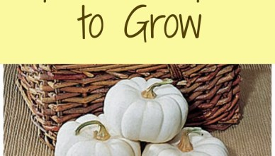Popular Pumpkins to Grow 7