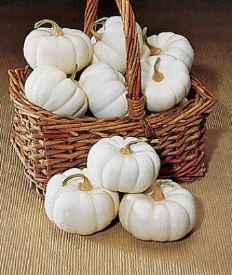 List of different types of pumpkins: Baby Boo Pumpkin