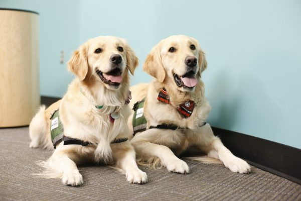 Dogs Doing Good: Sit…Stay…PLAY at Cook Children's Medical ...