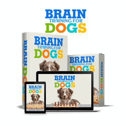 Brain Training for Dogs Program