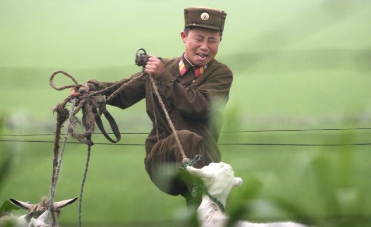 A North Korean soldier kicks a goat on the banks of the Yalu River near the North Korean town of Sinuiju, July 5, 2009. REUTERS/Jacky Chen