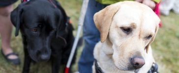 Blind people and guide dogs during the last training for the animals. The dogs are undergoing various trainings before finally given to the physically disabled people. [Shutterstock - Cylonphoto]