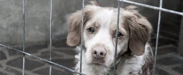 Dog in a cage. Davide Finocchi/Shutterstock.