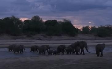 Elephants in Zambia (You Tube - Lion Mountain TV)