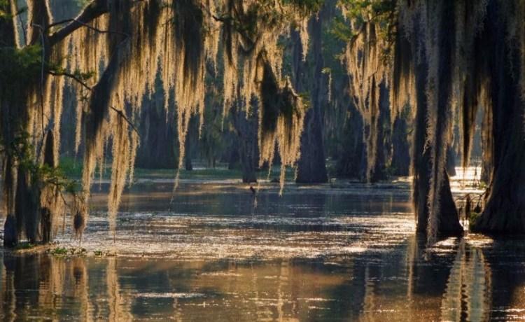 swamp Shutterstock/Pierre Jean Durieu