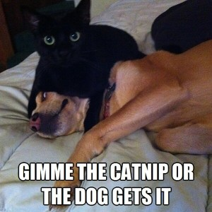 Gimme-the-catnip-or-the-dog-gets-it