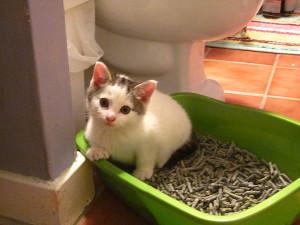 cat-butts-litter-box-01_0