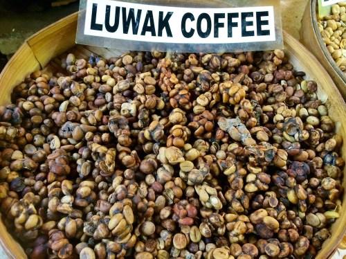 kopi-luwak