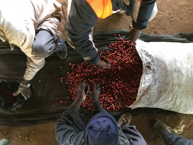 Nairobi Kenya Coffee