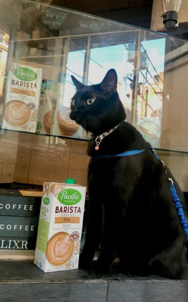 Glitter Cat Barista Bootcamp was sponsored by Pacific Foods.
