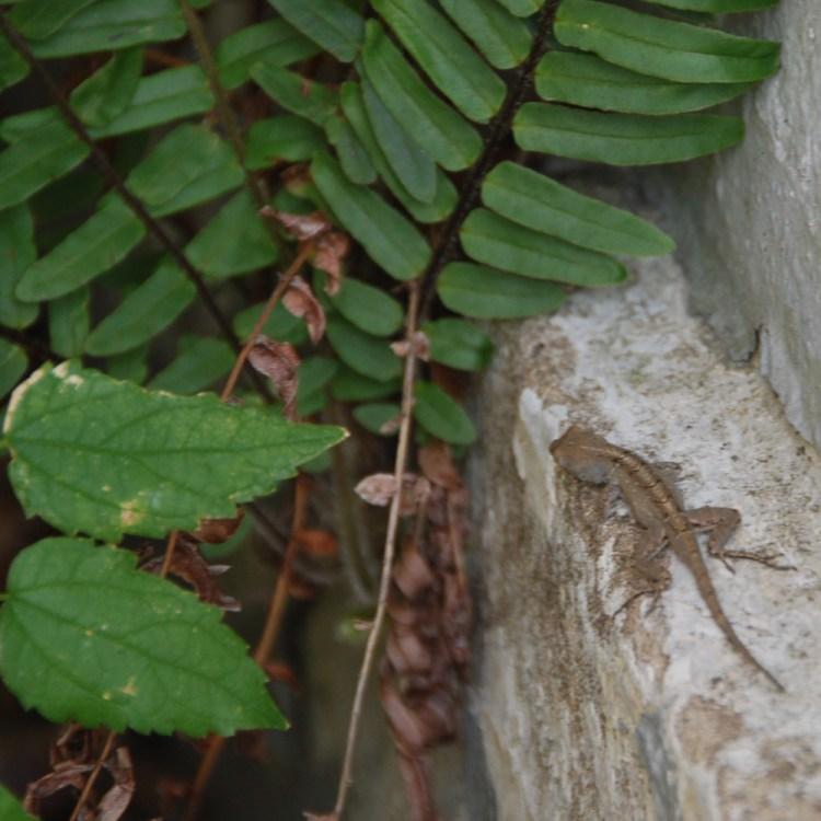 LFC1_Salamander