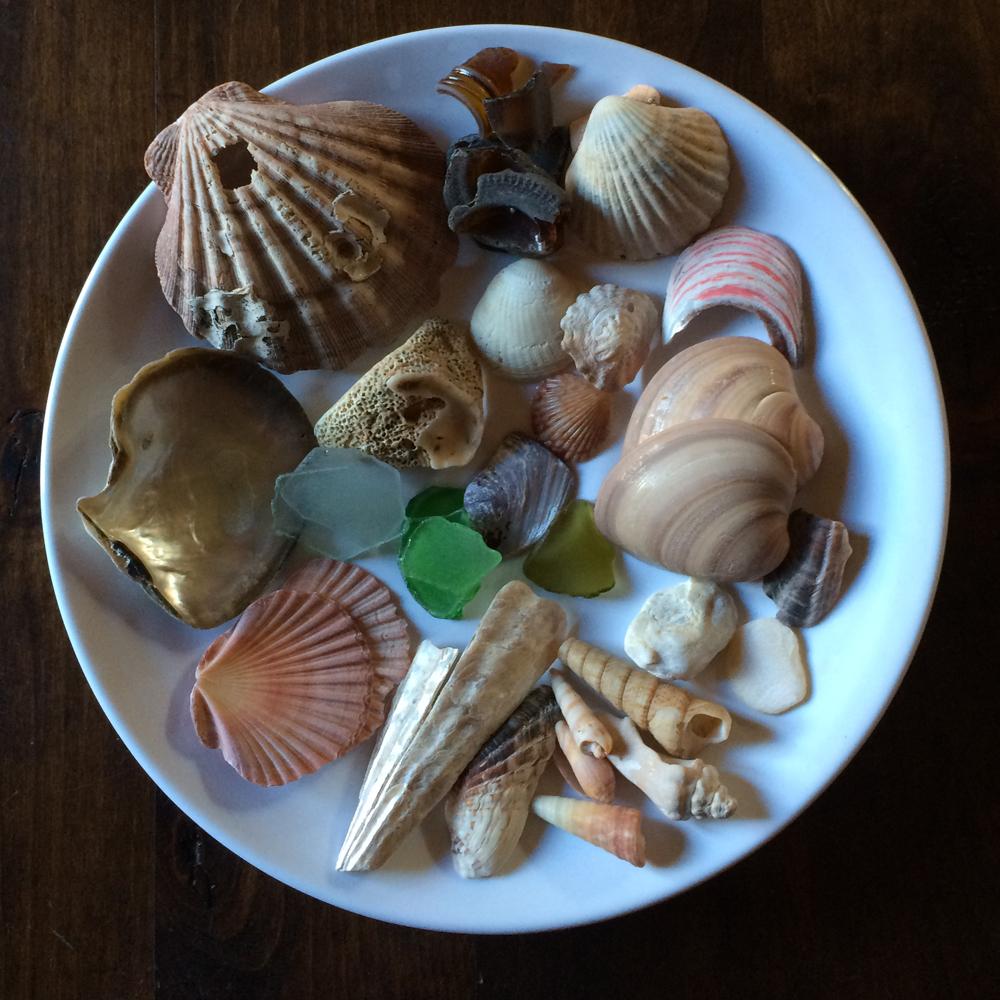Shells_Loreto
