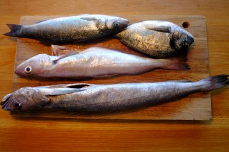 We bought an assortment, then didn't know which was which. Pollock, hake, sea bream and sea bass