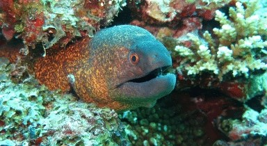 nigel farage moray eel daily distress satire