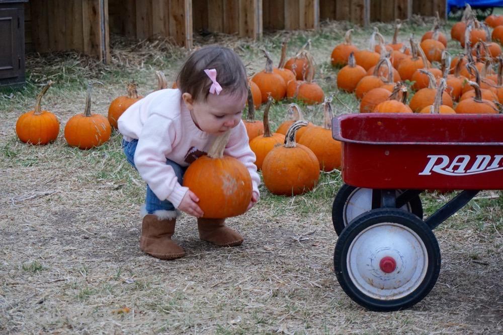 Abby with pumpkin