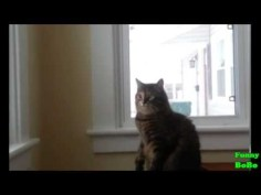 Cats Trying to Catch Snowflakes Compilation    FunnyBOBO