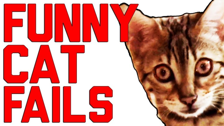 Funny Cat Fails Compilation (July 2016) | FailArmy