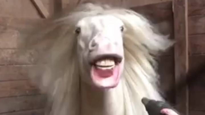 TRY NOT TO LAUGH 🐶😺🐟🐴🐐🙉🦃 Funniest Farm Animals Scared Reactions   FailArmy