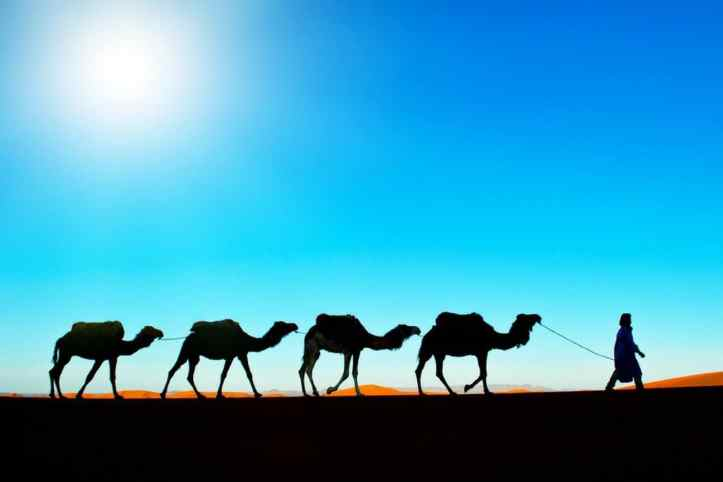 Camel-Expeditions-in-Morocco-COVER.jpg