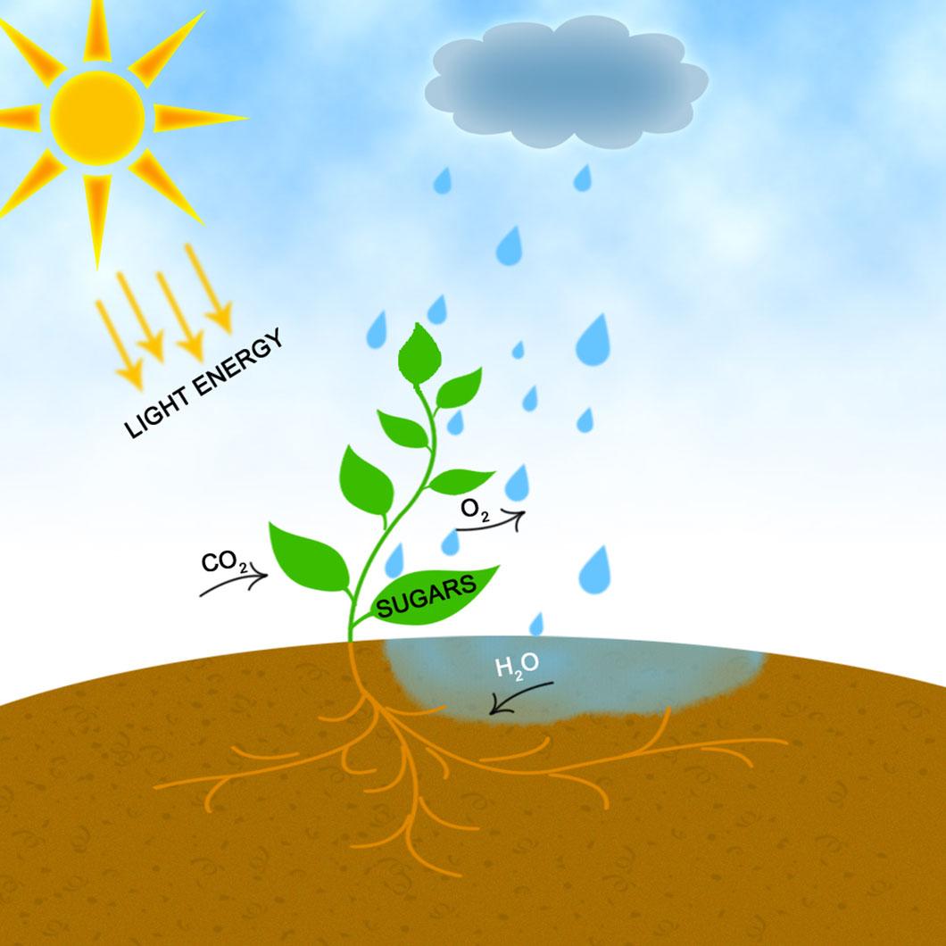 La Photosynthese Ce Processus Prodigieux Qui Pourrait