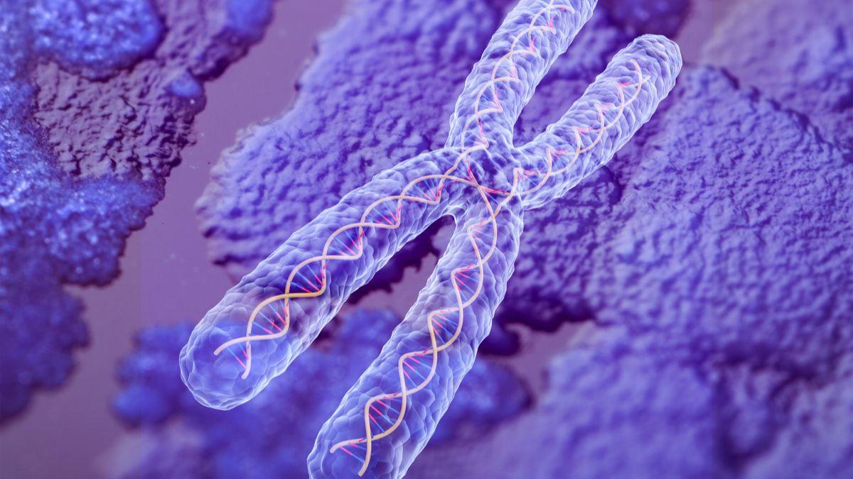Des scientifiques ont mesuré pour la première fois la masse des chromosomes humains